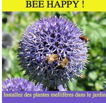 Bee happy installez des plantes mellifères