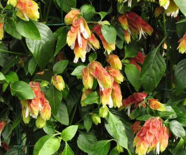 kleine exotische tuinplanten winterhard