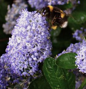 waarom zijn bijen belangrijk