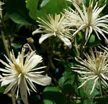 lente soorten bloemen paars