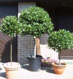 Grote Potplanten Voor Buiten.Kuipplanten Voor Terras En Balkon