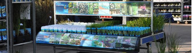 P pini res grossistes producteurs de plantes aquatiques for Jardinerie belgique en ligne